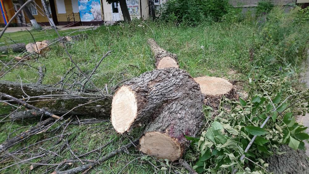 В Центральном районе Воронежа вырубают старые деревья
